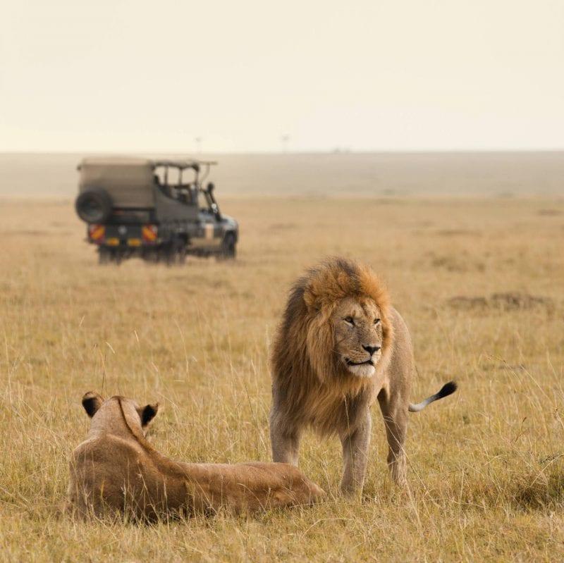 South African safari