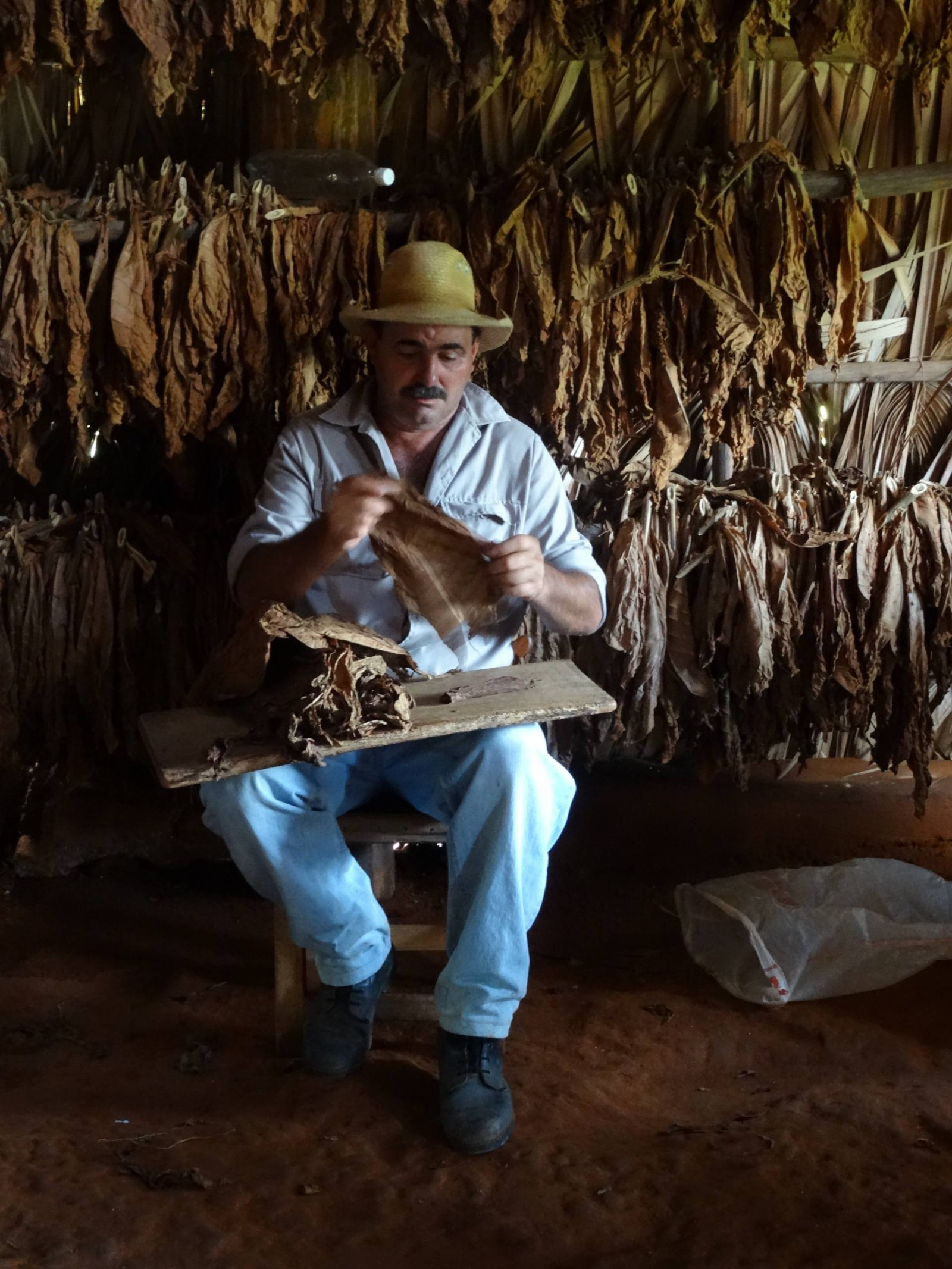 Making cigars in Pinar del Rio