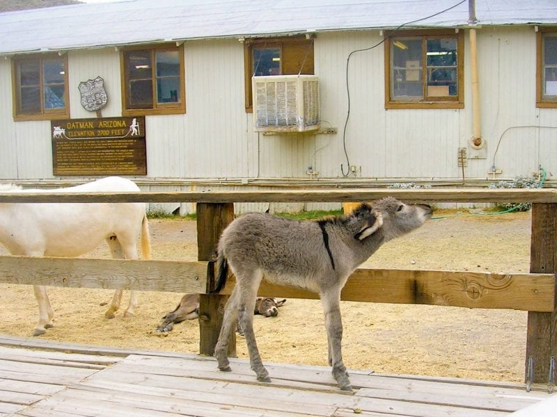 Donkeys on Route 66