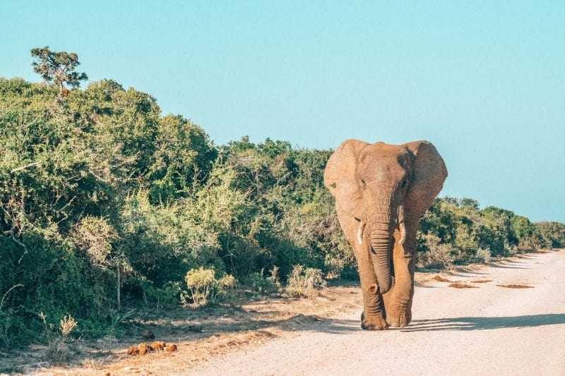 2 weeks in South Africa: Addo Elephant Park