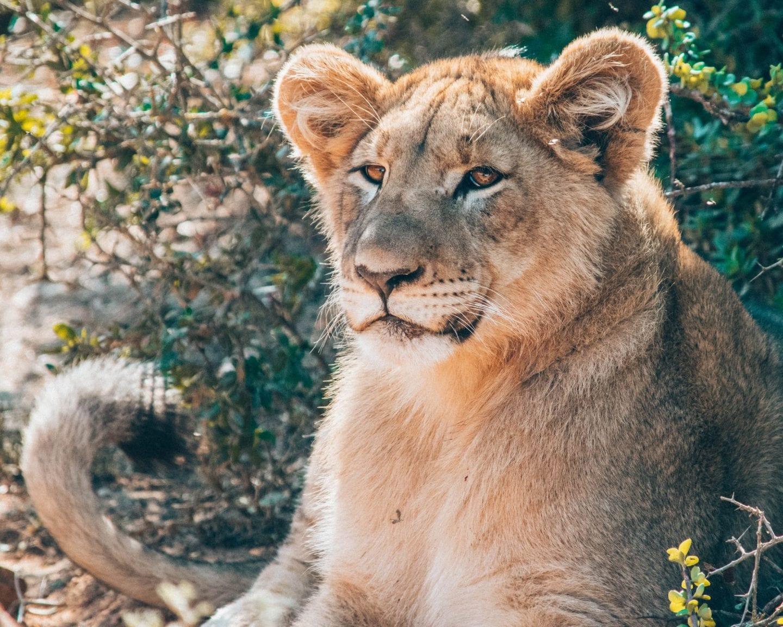 9 reasons to go on safari