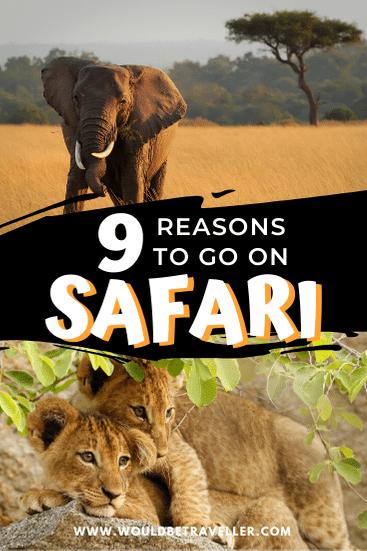 Reasons to go on safari pin