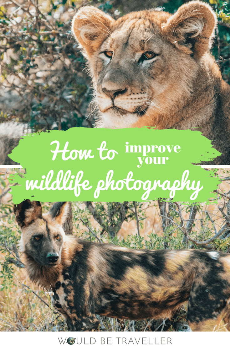 Would Be Traveller How to improve your wildlife photography pin