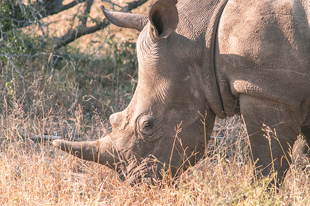 Would Be Traveller Wildlife Encounters in South Africa Close encounter with a rhino