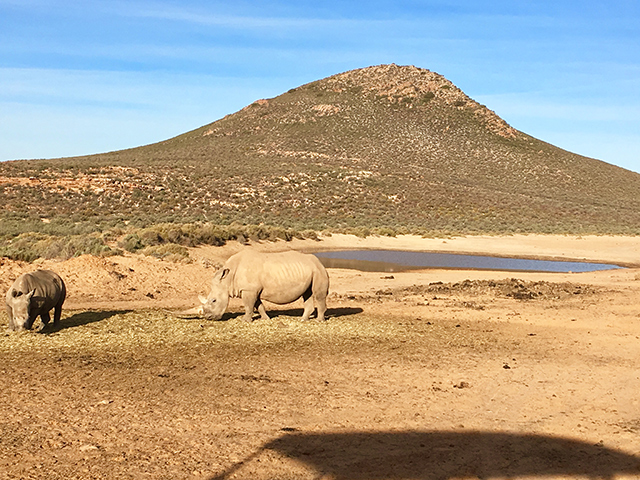 Would Be Traveller unusual wildlife destinations rhinos in south africa