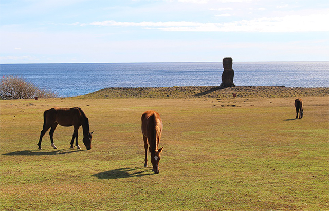 Would Be Traveller unusual wildlife destinations wild mustangs in easter island