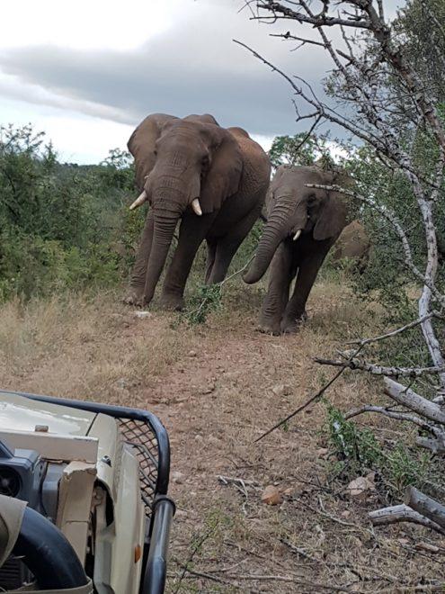 Would Be Traveller South Africa Safari Lodges - Amakhosi Safari Lodge Pongola