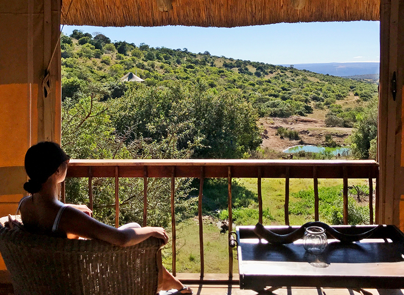 Would Be Traveller South Africa Safari Lodges - Bukela Game Lodge at Amakhala Game Reserve in South Africa
