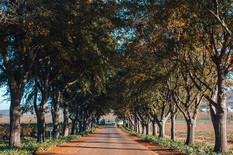 Would Be Traveller South Africa Holiday Destinations Stellenbosch