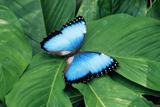 Butterfly Garden in Monteverde