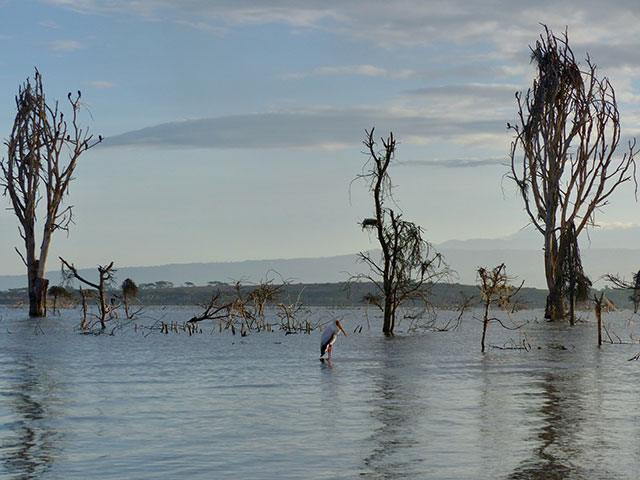 Lake Naivasha with bird aongst trees