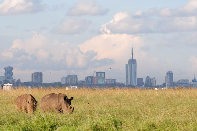 Rhinos in front of Nairobi in Nairobi National Park