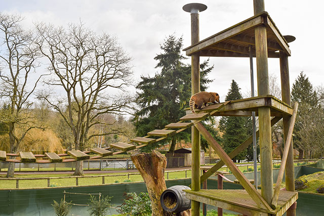Animals in Beale Park, one of the best things to do in Reading with kids