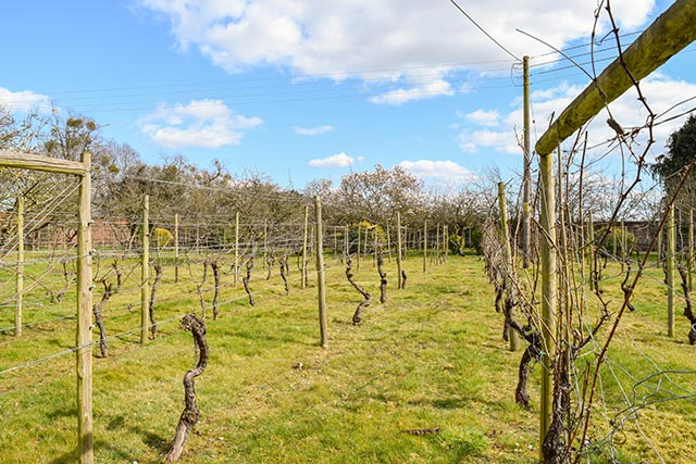 Stanlake Park Wine Estate - one of the best things to do in Reading