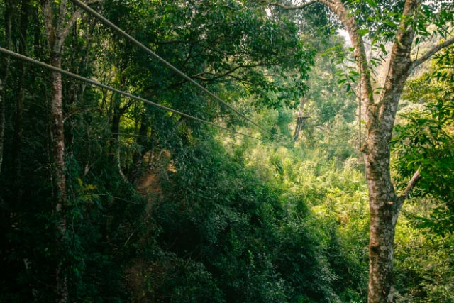 Ziplining through forest canopy in Monteverde