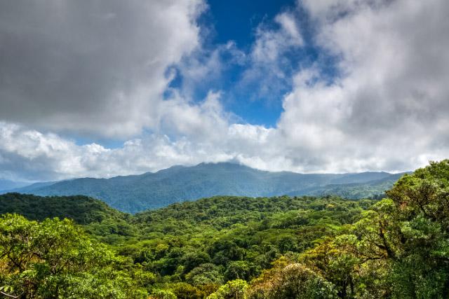 Monteverde scenery from a hanging bridge
